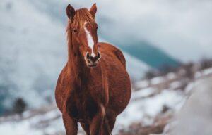 Modern hästfysioterapi och equiterapi för din häst